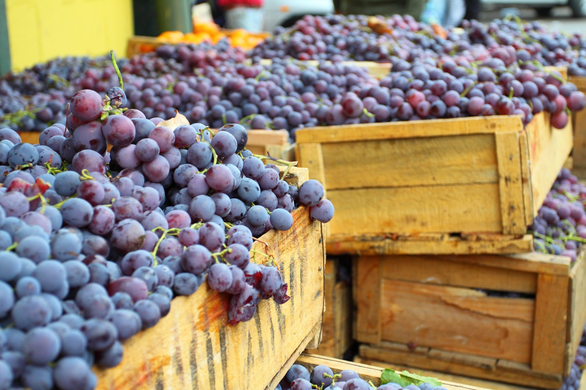 Piedmont Wine Tours and Tastings with Local Winemakers – Wine Tours