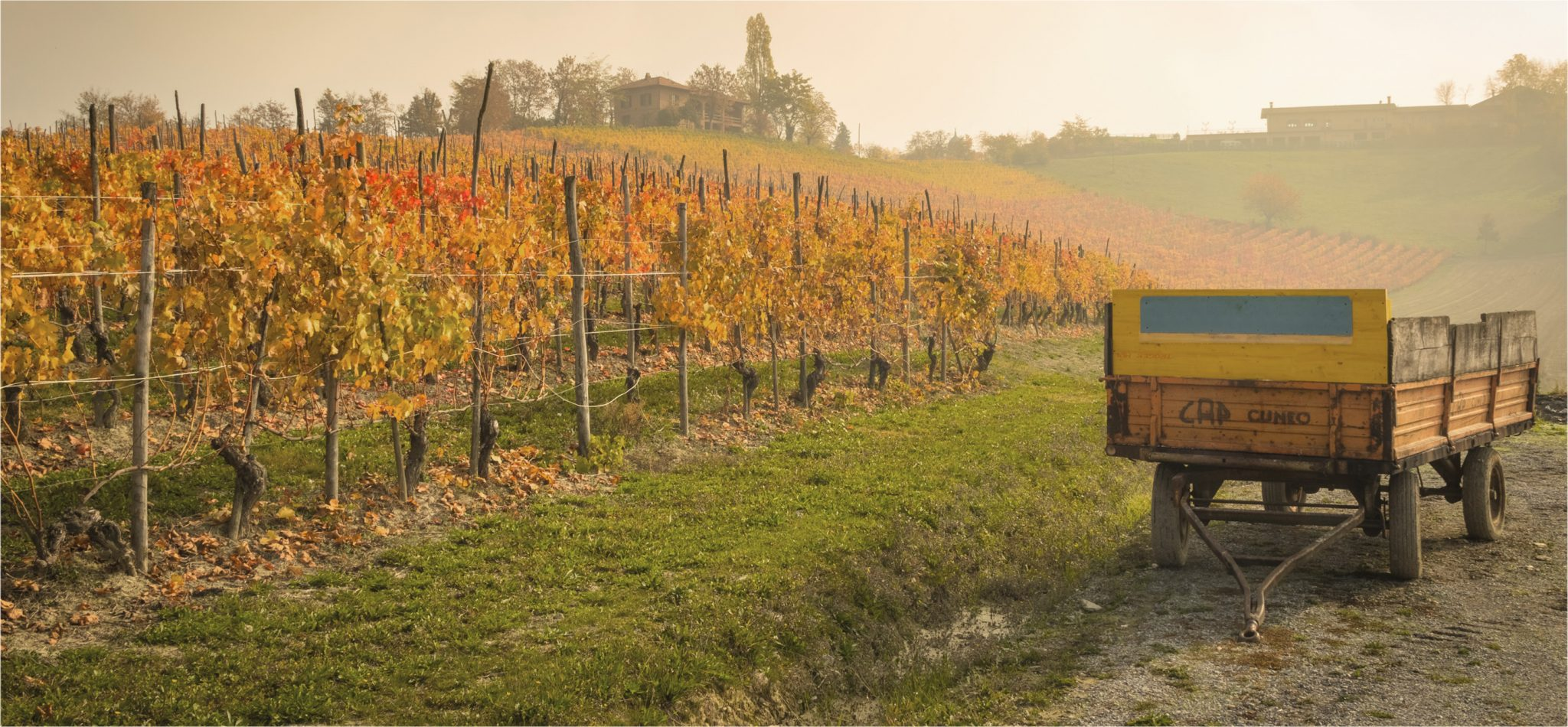 Langhe vineyards tour